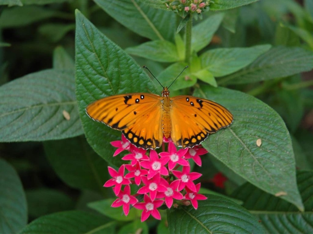 Papiliorama – Nocturama. Fauna, Flora, Fun