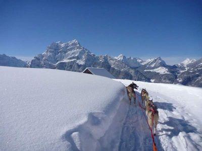 Schlittenhunde - Huskies:  - Schlittenhunde Tages-Abenteuer