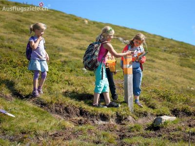 Berner Oberland - Schulreise aufs Niederhorn – Alpen-OL, Trottibike, Wildbeobachtung