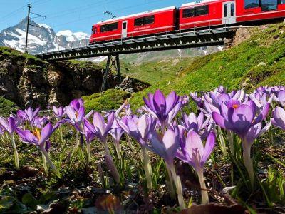 Graubünden - Frühlingsaktion Krokus – Graubünden entdecken ab CHF 35