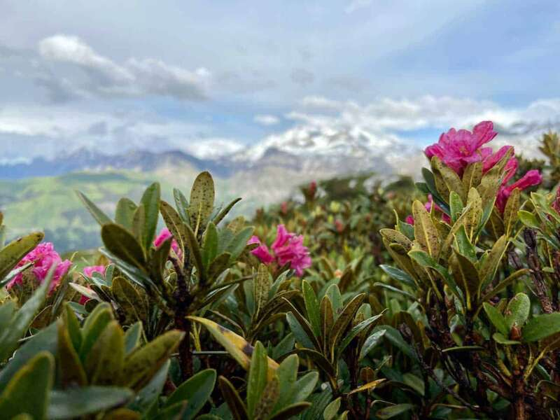 Alpenblumenweg – Bild Lenk Bergbahnen, Margrit Dubi und Gernot Brendle