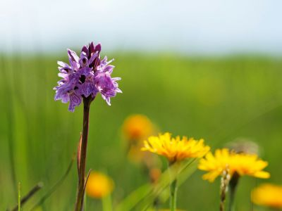 Berner Oberland - Alpenblumen-Pracht Betelberg: Rundweg